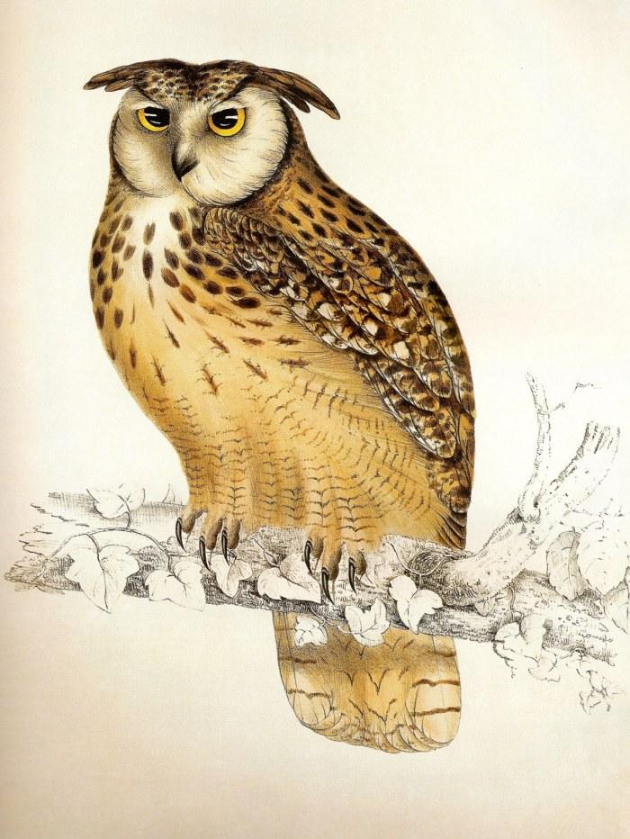 Free printable, Owl